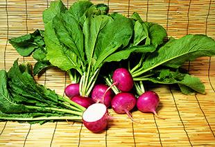 伝統野菜「あつみかぶ」の魅力のイメージ